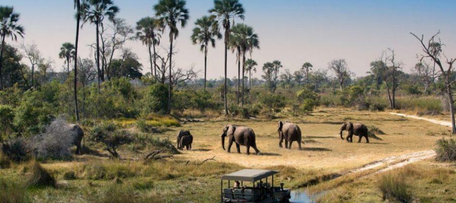 Thailand, Australia, United Kingdom, Hong Kong, Japan and Singapore Car Exporter Importer to Botswana